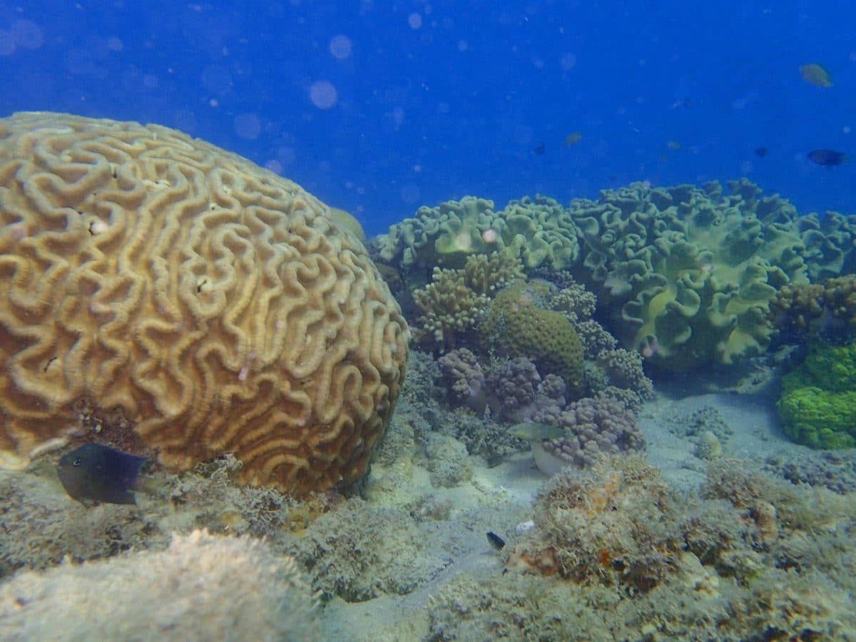 snorkel islas Whitsunday Australia