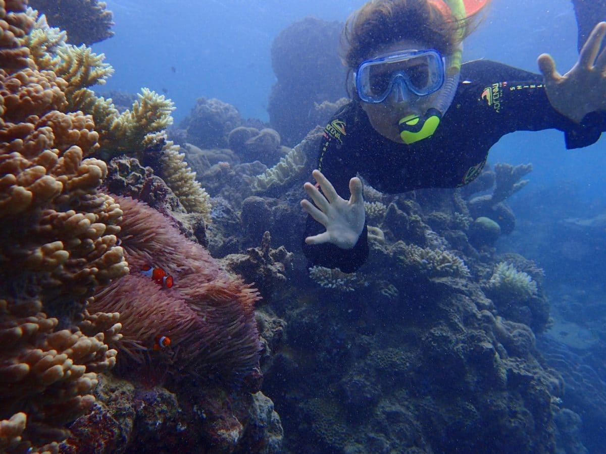encontramos a Nemo haciendo snorkel en la Gran Barrera de Coral de Australia