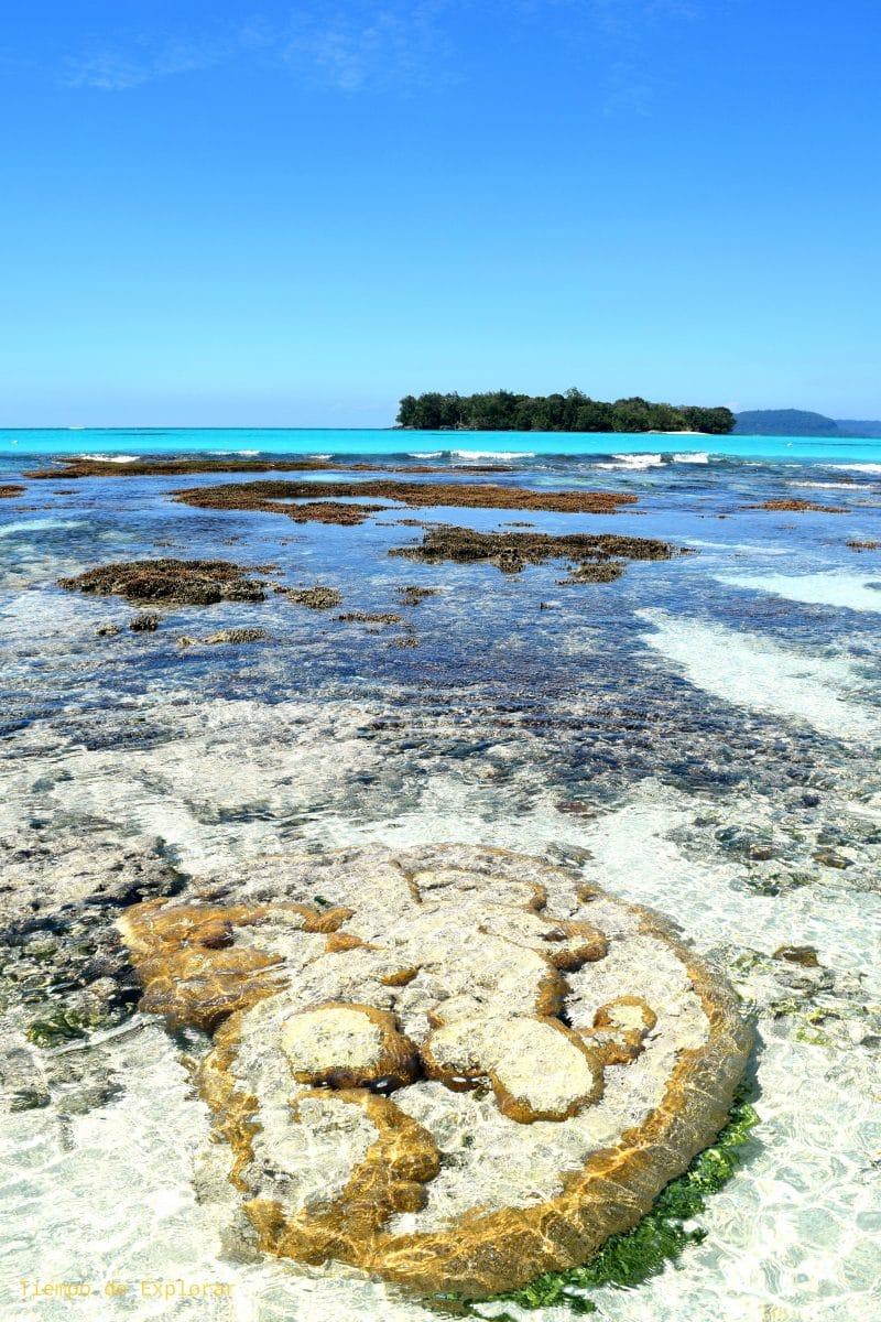 Arrecife de coral Vanuatu