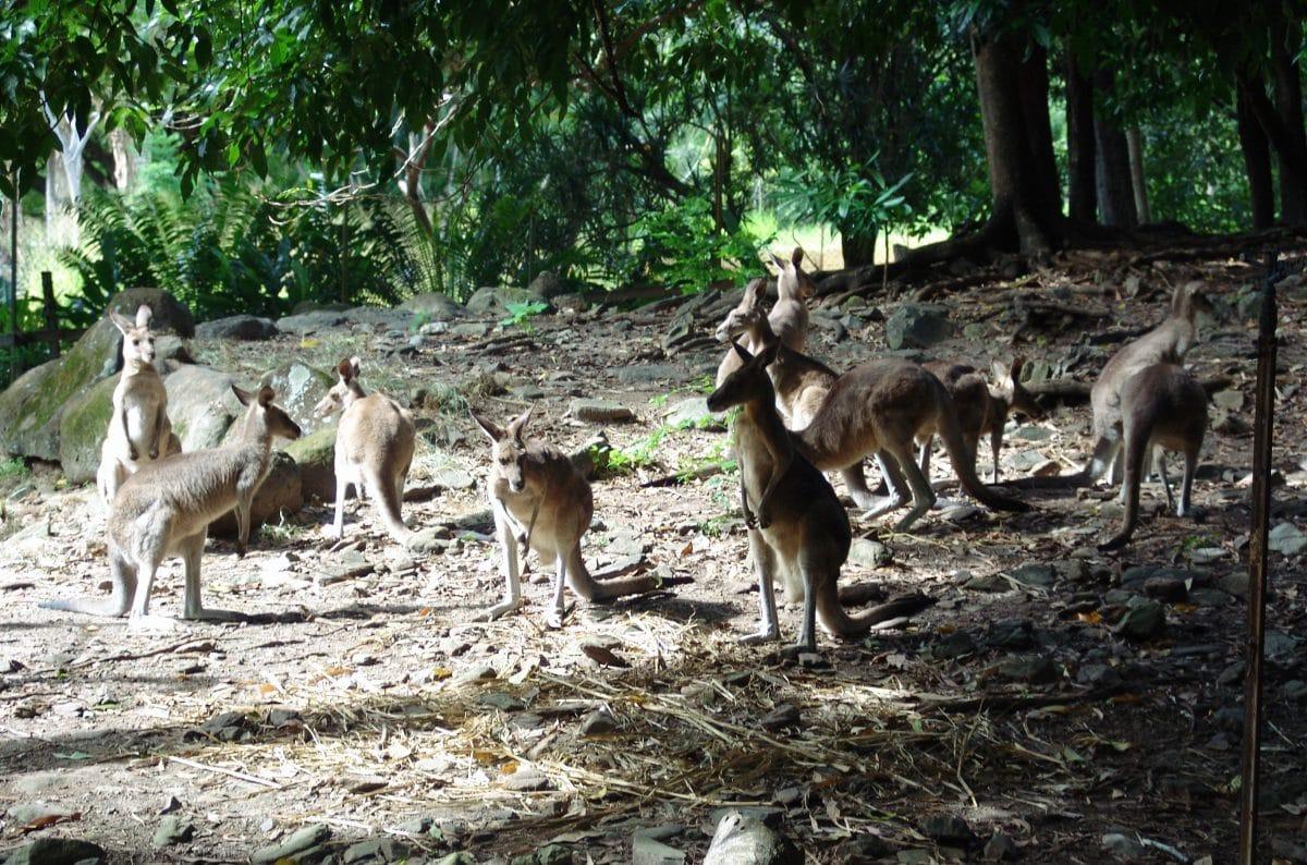 Hartley´s Cocodrile Adventures, Australia