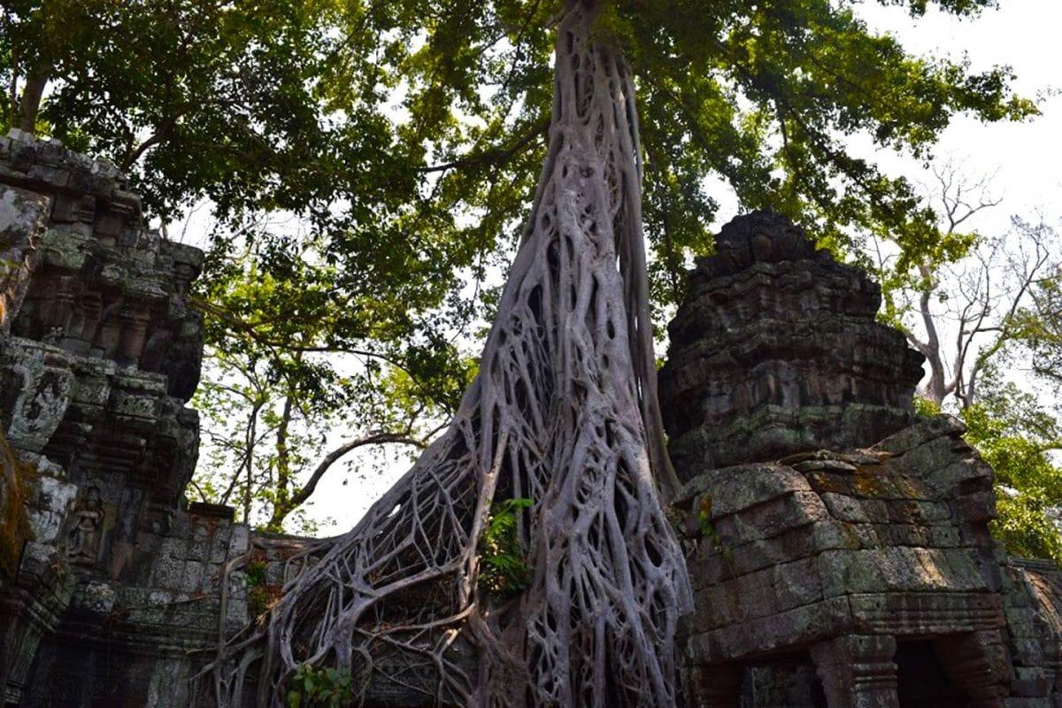 Ta Prohm los mejores templos de Angkor Wat