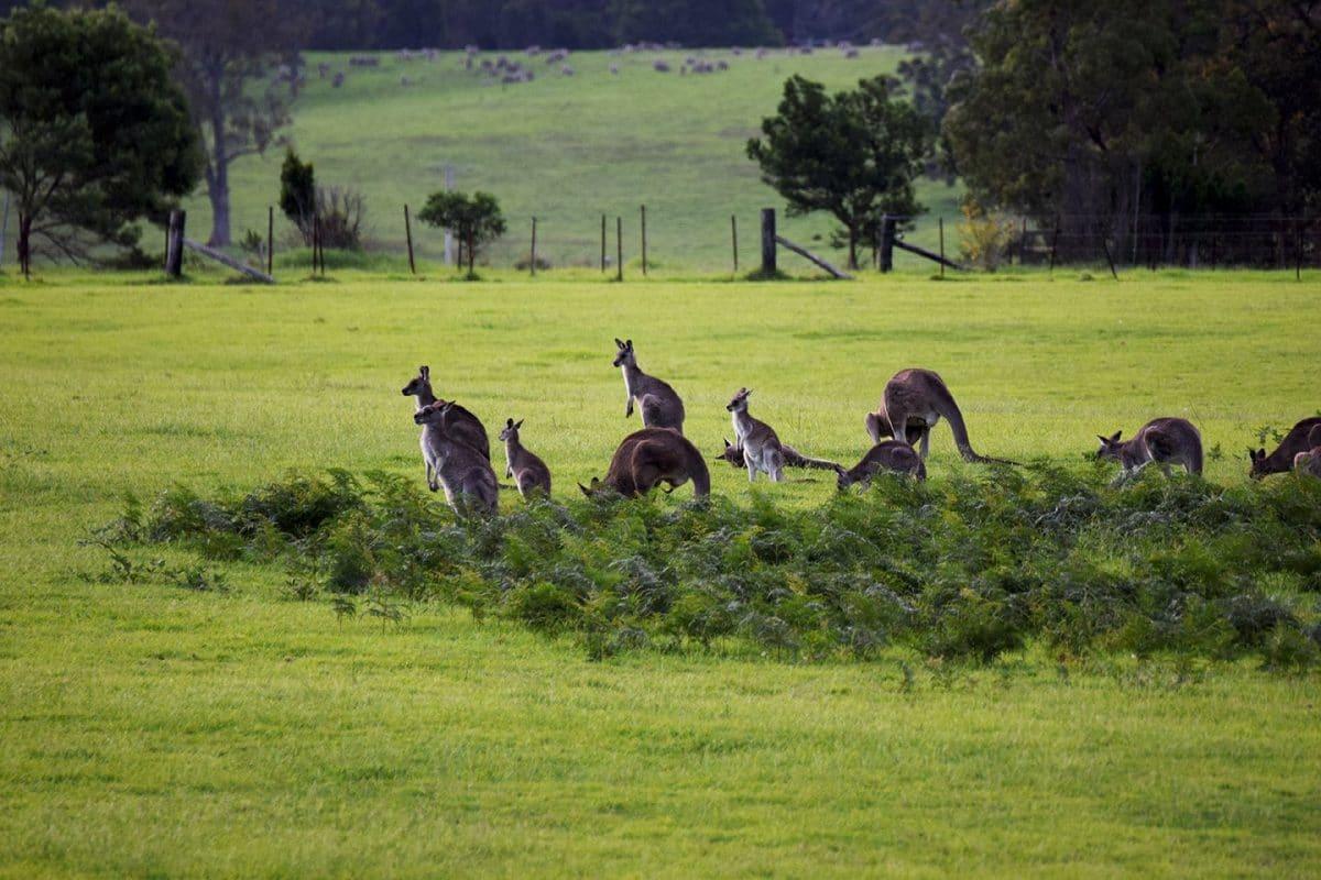 Ruta por la Costa Este NSW, de Sydney a Melbourne