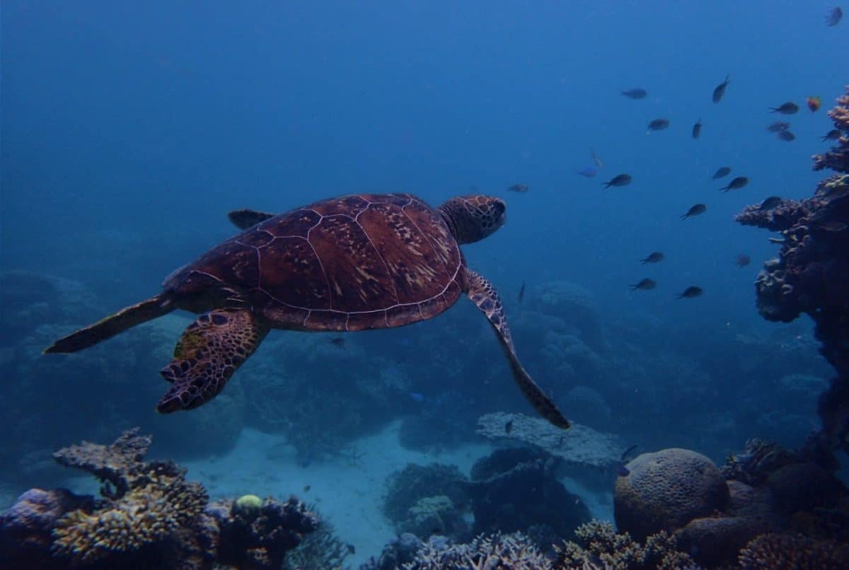 Gran Barrera de Coral. Blog de Viajes Australia