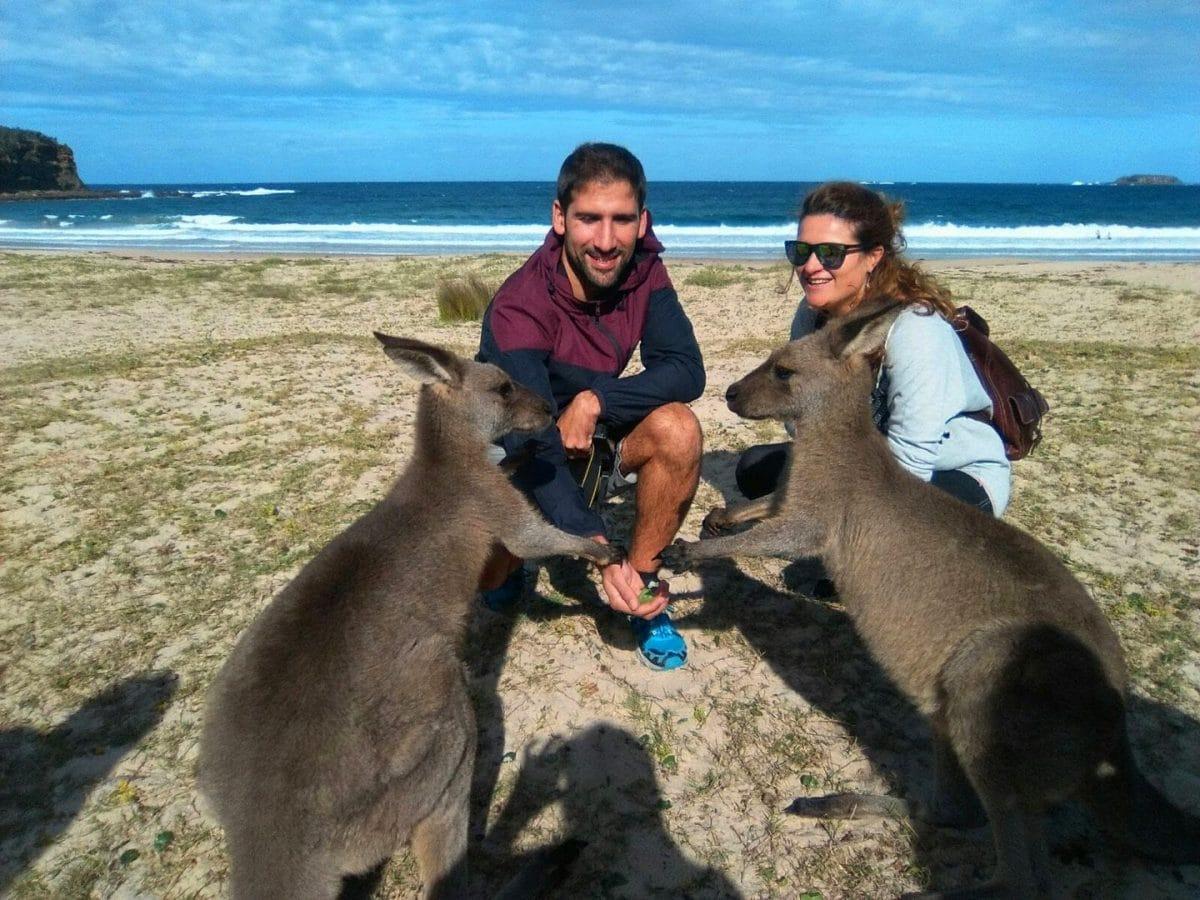 animales auastralianos. Razones para viajar a Australia