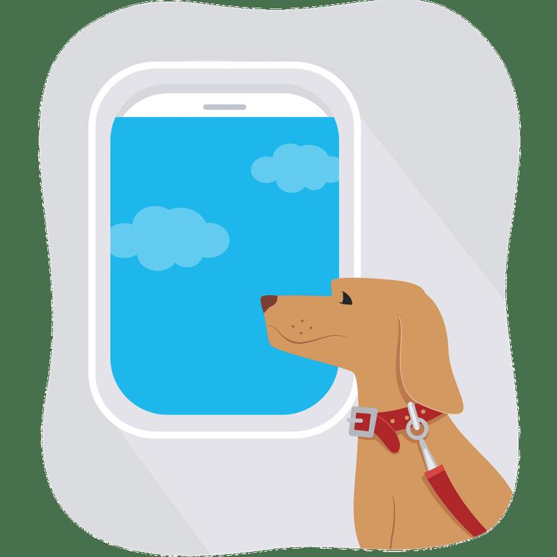 Viajar a Australia con mascota