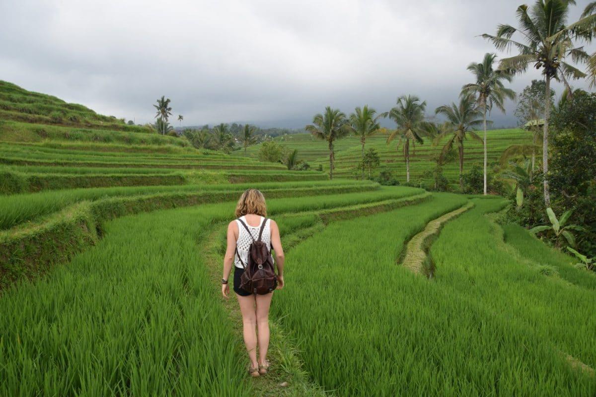 terrazas de arroz Jatiluwih