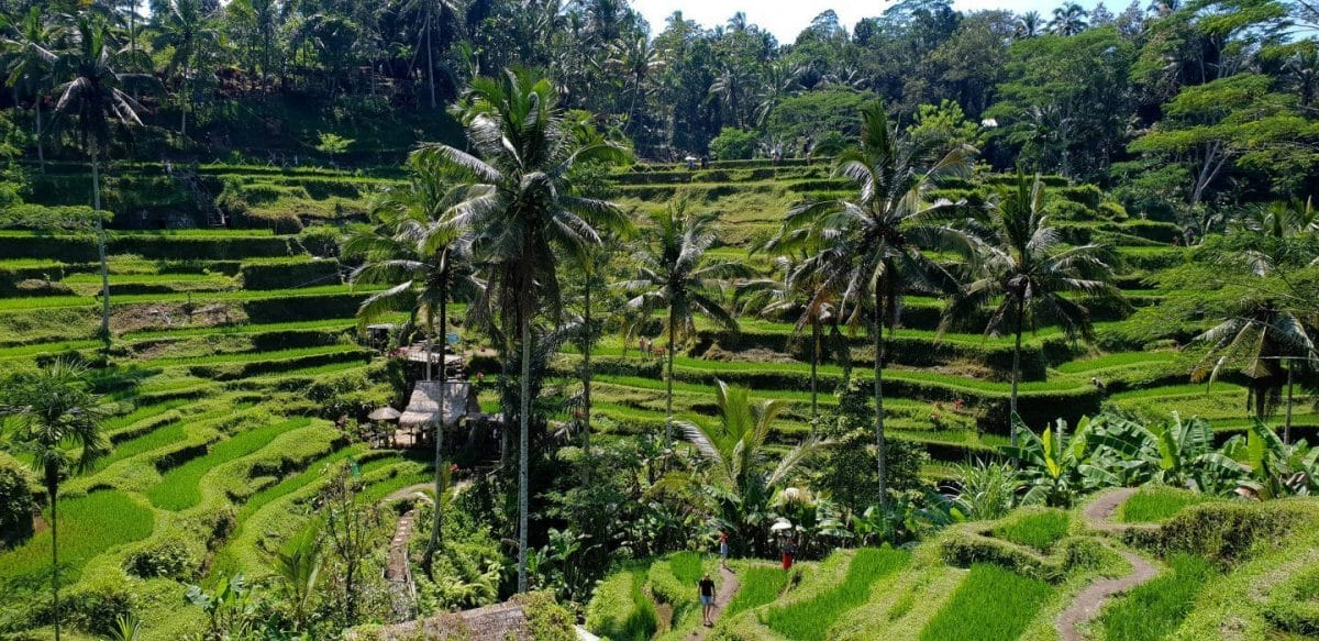 terrazas de arroz de Tegalalang ruta por bali 10 dias