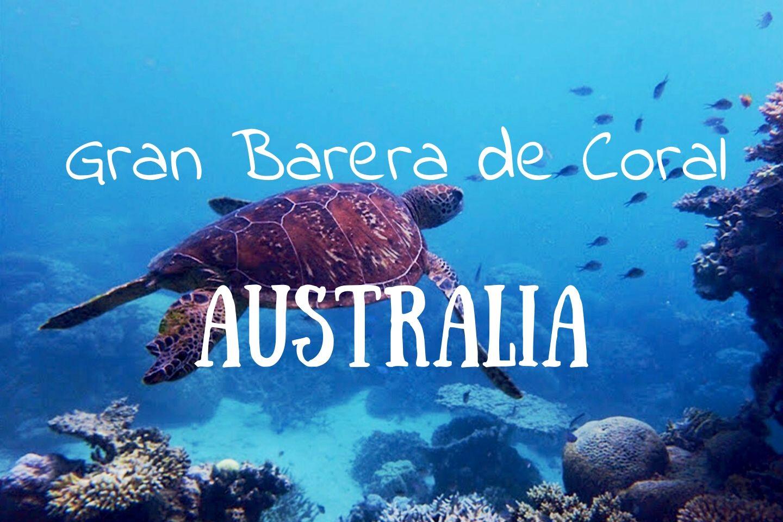 Snorkel en la Gran Barrera de Coral de Australia