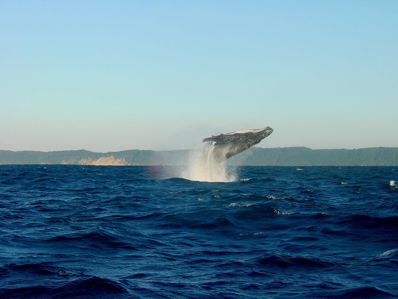 tour ballenas jorobadas